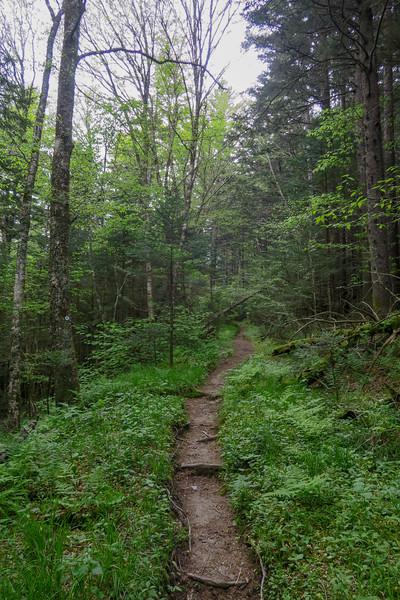 Mountains-to-Sea Trail -- 5,390'