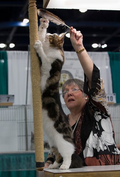 CatShow2014193.jpg