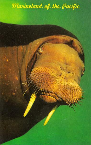 Woofy the Walrus