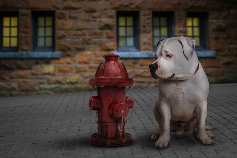 hydrant-dog-dog.jpg