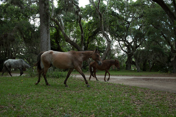 Cumberland Island in July