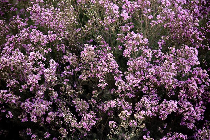 Spring Flowers B-402.jpg