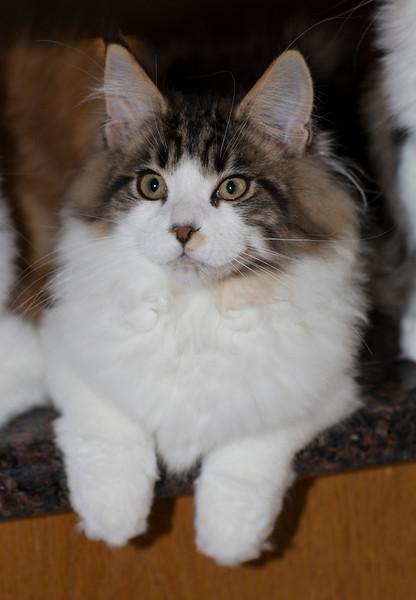 Kittens281.jpg