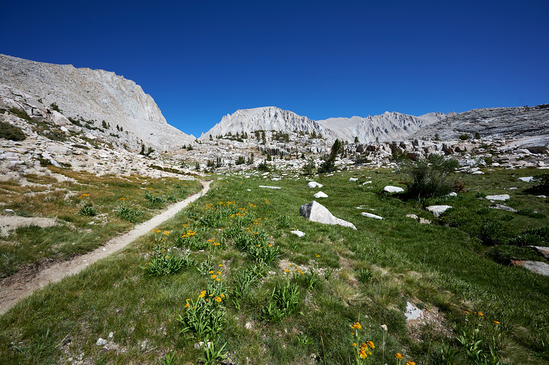 Mt. Whitney and meadow