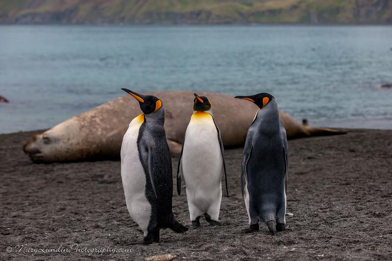 Antarctic-133