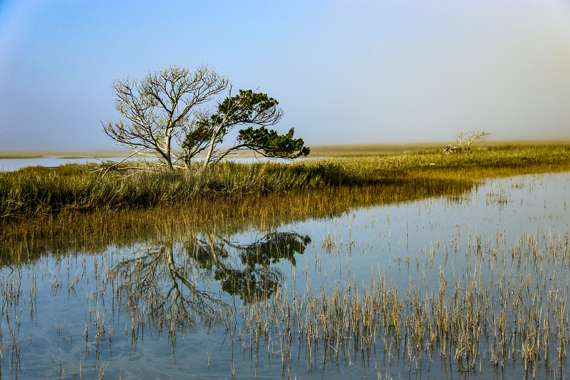 image of wetlands with marshy landscape
