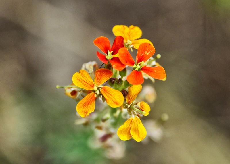 NEA_0400-7x5-Flowers.jpg
