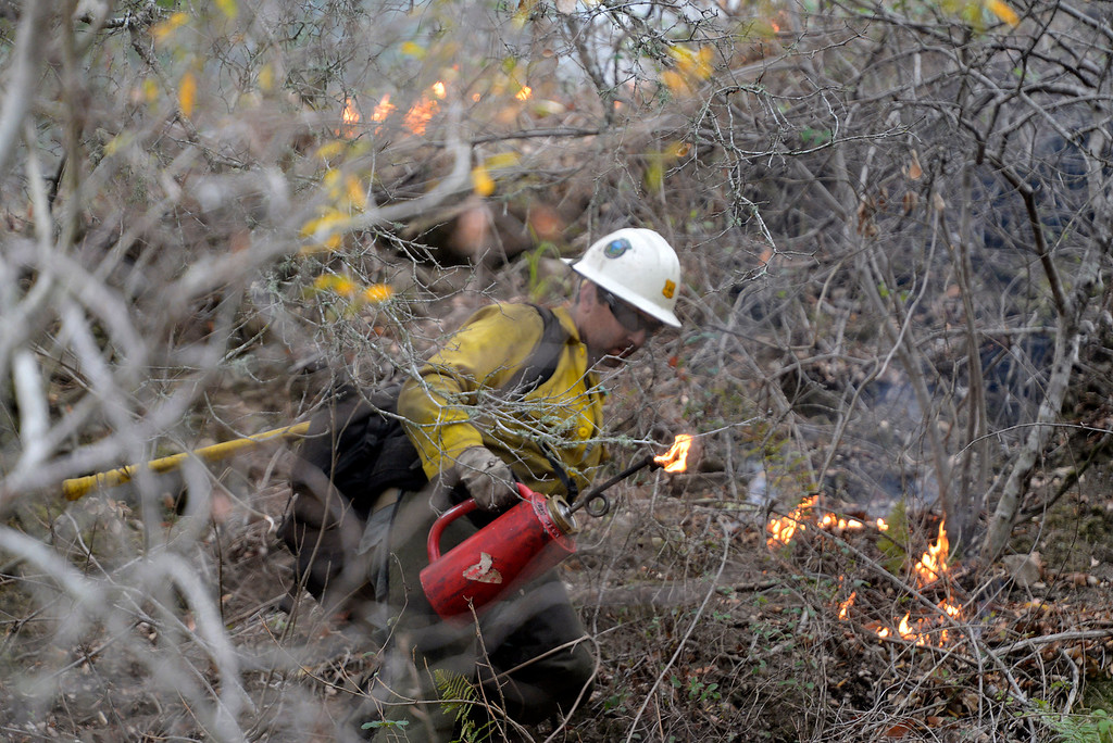 . Los Padres National Forest firefighter Tyson Navarro climbs through poison oak and other brush while lighting a backfire along Highway 1 between Pfeiffer Ridge Road and the Big Sur Station in Big Sur, Calif. on Wednesday December 18, 2013. (Photo David Royal/ Monterey County Herald)