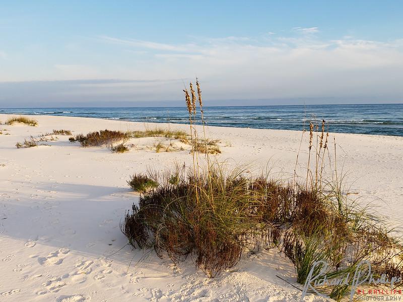 Sea Oats on buried Sand Dunes