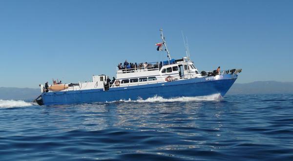 3-Day SCUBA dive trip to San Nicolas Island