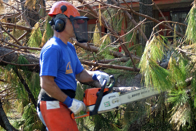 Chainsaw Crew Working