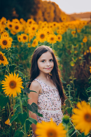 Sunflowers Meier