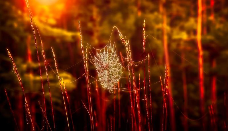 Spider Webs by Ray Bilcliff - www.trueportraits.com