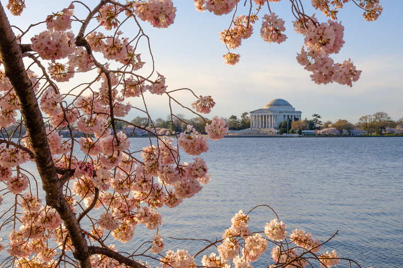 20180408 DC Cherry Blossoms 042.jpg
