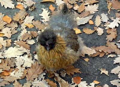 Cracow Zoo november 2011