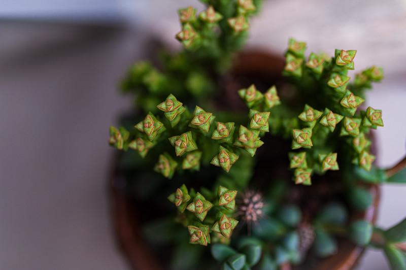 succulents 031420-1827.jpg