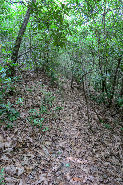 Green Mountain Trail -- 3,500'