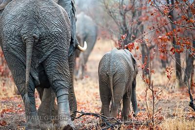 South Africa, Oct-Nov 2013