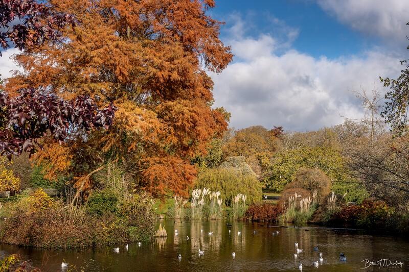 Wakehurst_Autumn-6079.jpg