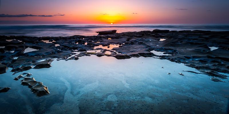Coastal_Tribolet-106.jpg