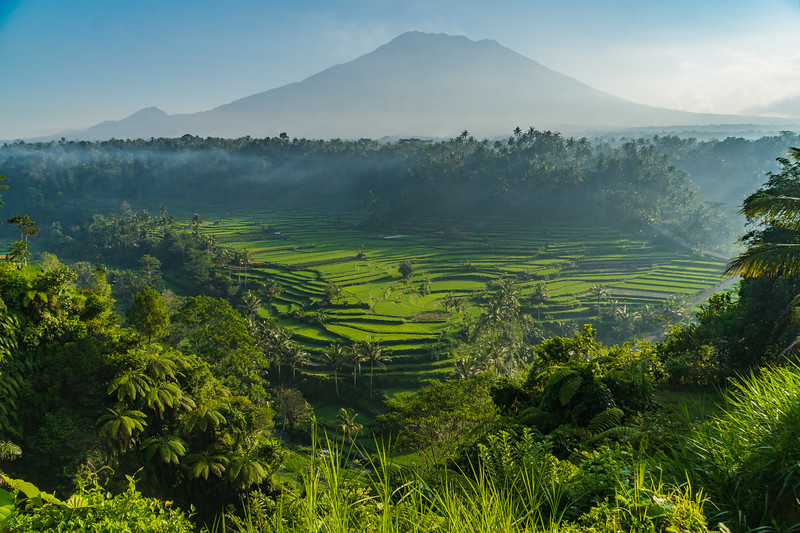 Ubud Rice Terrace and Mount Agung