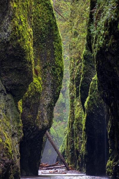 Oneonta Gorge April 2016-13_4_5.jpg