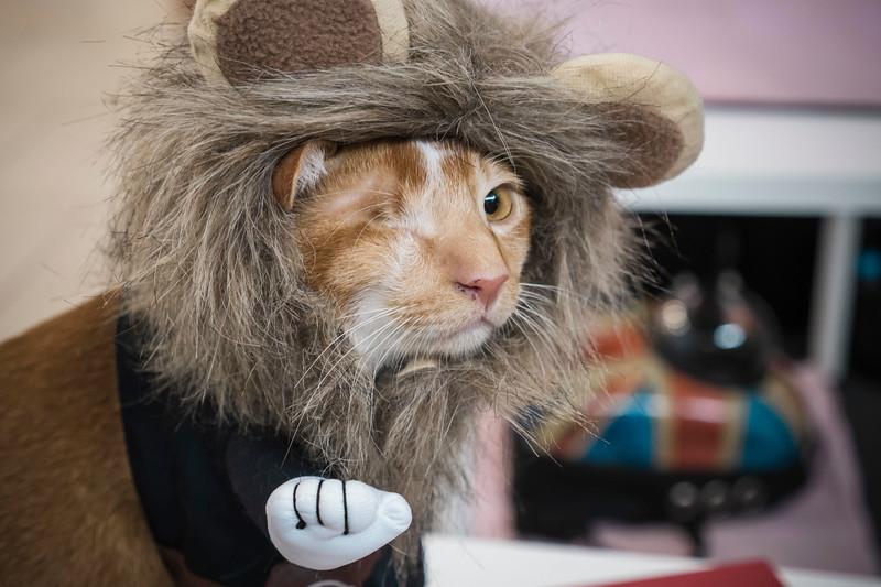 VividSnaps-The-Seletar-Mall-CAT-Dress-Up-Contest-080.jpg