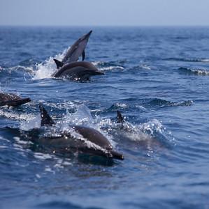 2011: Baja California, 14-29 Agosto