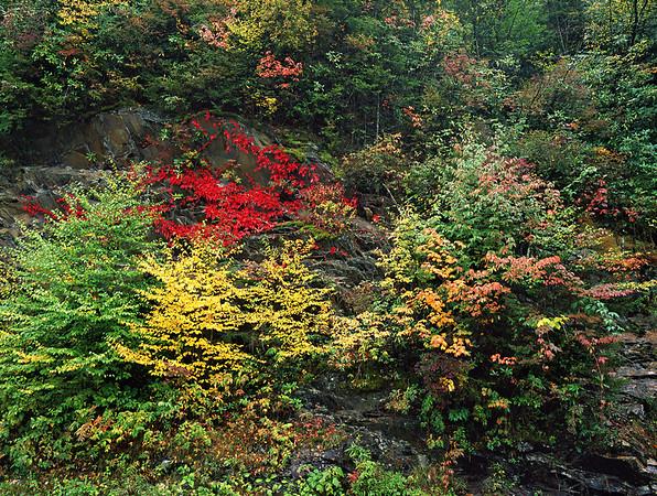 RESERVOIR of Autumn images