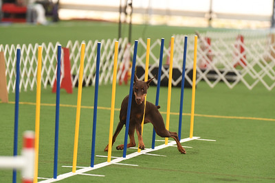 Lancaster Kennel Club AKC Agility Trial October 2-3