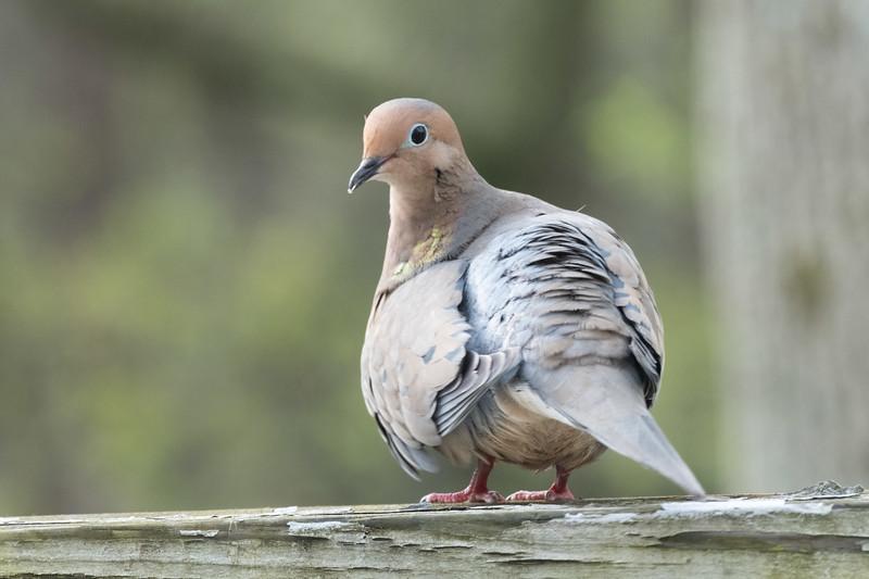 birdfeeder-7310.jpg