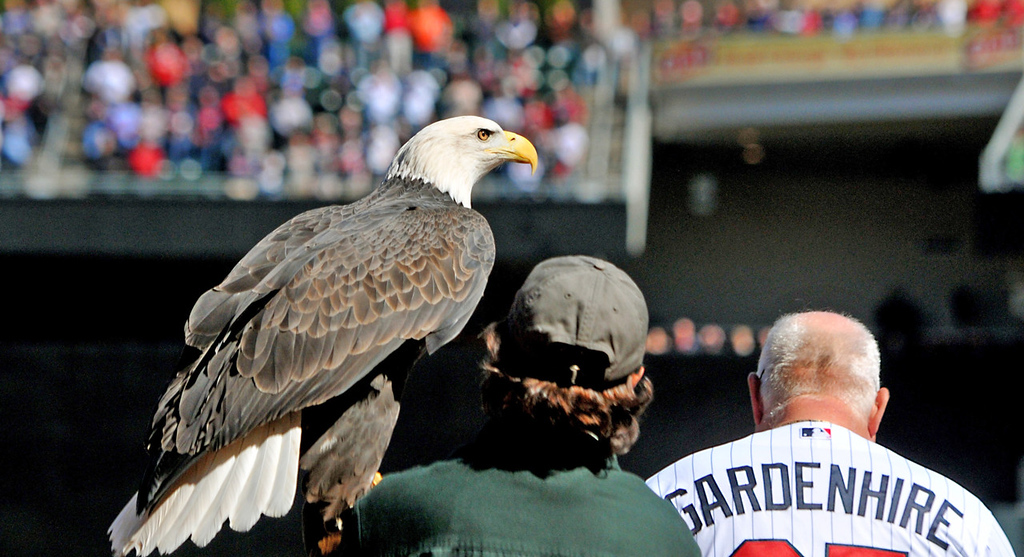 . An American bald eagle is held by a trainer as the National Anthem is played before the start of  Monday\'s home opener. (Pioneer Press: John Autey)