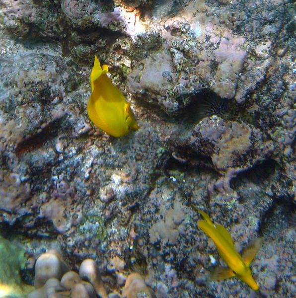 434- 20080416- Hawaii 20-Snorkelling IMG_0601.jpg