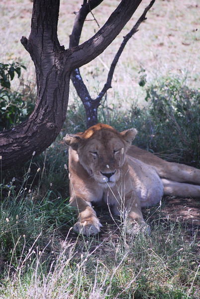 Serengeti (178).JPG