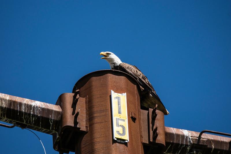 Eagle Bird.jpg