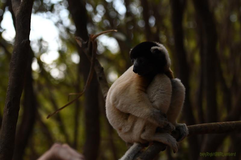 Madagascar 2017 (23)