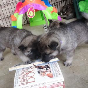 2014-04-02 Funny Pups