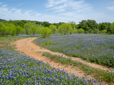 Out and About in Central Texas
