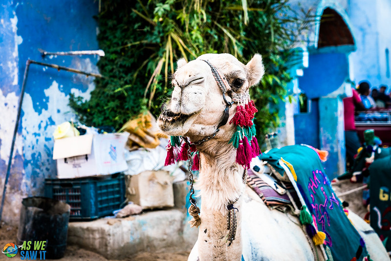 Camel waiting for a rider in a Nubian Village near Aswan, Egypt