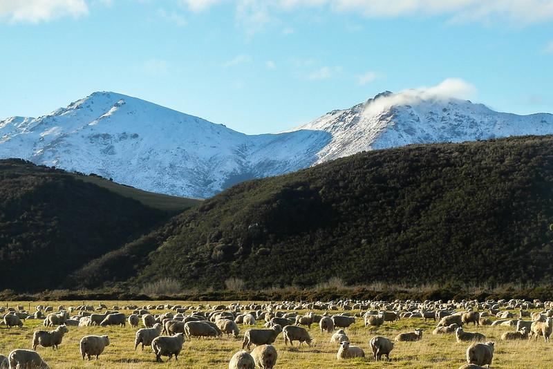 Nieuw_Zeeland_13_Dimitri_Belfiore.jpg