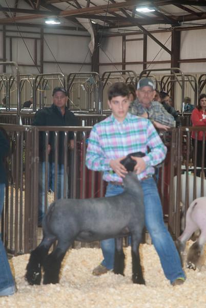 kay_county_showdown_sheep_20191207-108.jpg