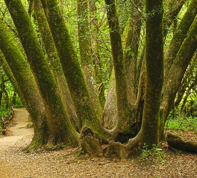 Muir Woods IMG_3698.jpg