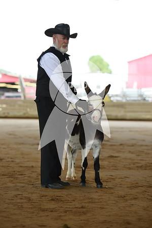 Mini Donkey Show