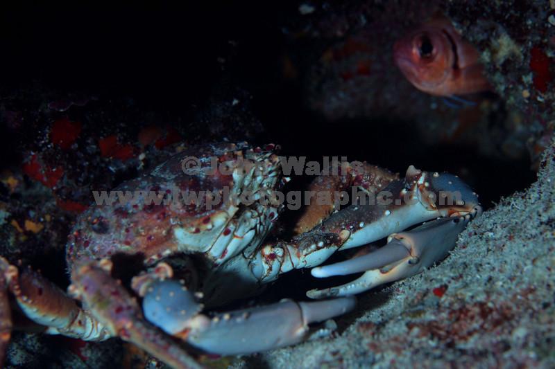 Crab & squirrel fishRN