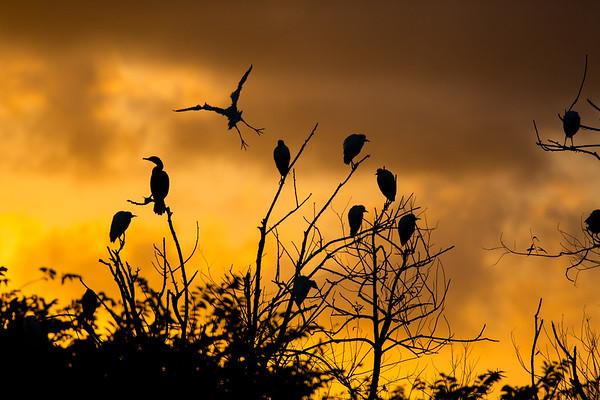 Florida Avian Paradise 2015