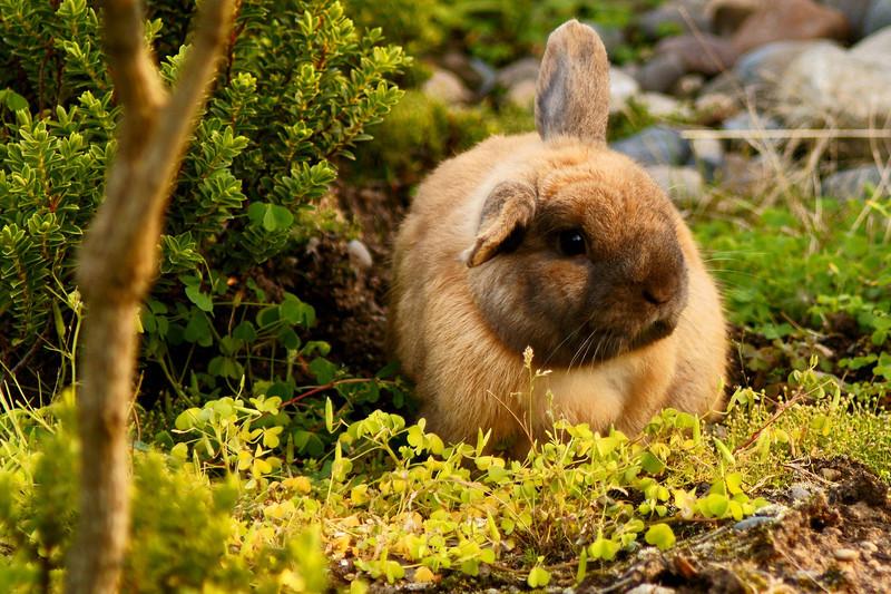 Bunny11.jpg