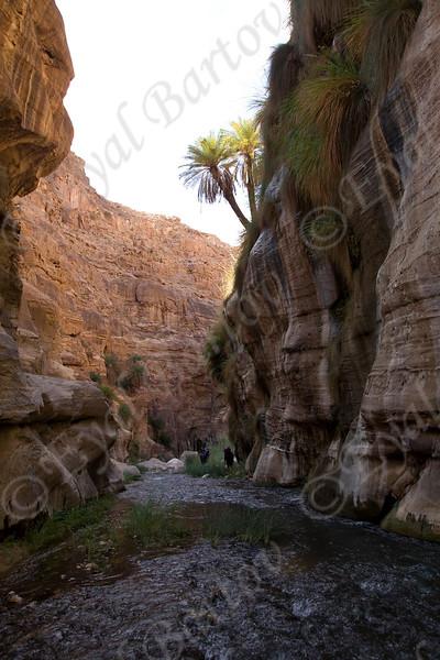 IMG_0995 Zered wadi- Jordan.jpg
