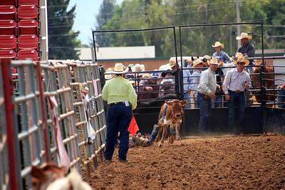 Calf & Steer Riding