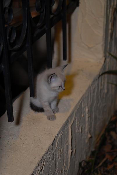 2007 04 12 - New Kitty 040.JPG