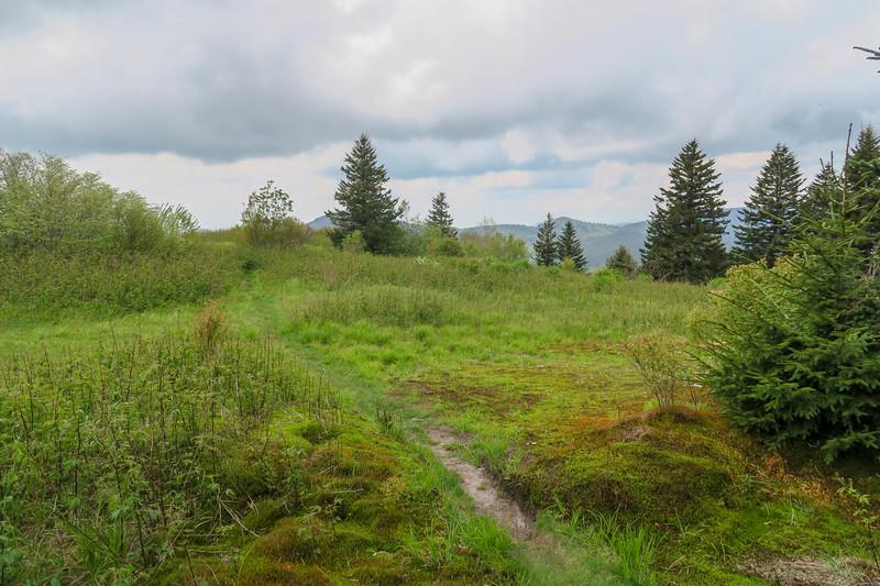 Fork Ridge Meadows Spur Path -- 5,810'